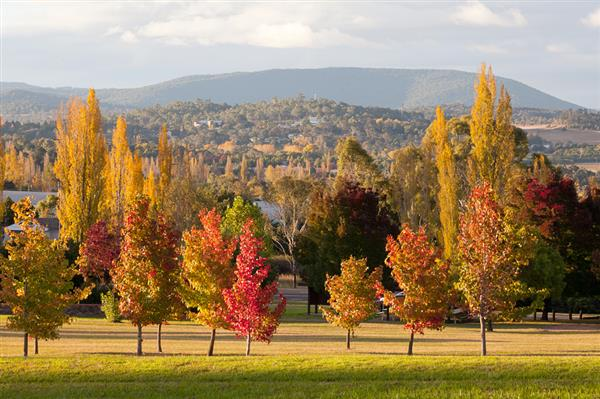 Armidale Autumn